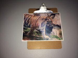 tiger clip board