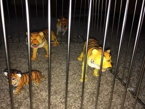 tigers in a cage