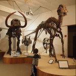 Go, See, Play: UW-Madison Geology Museum