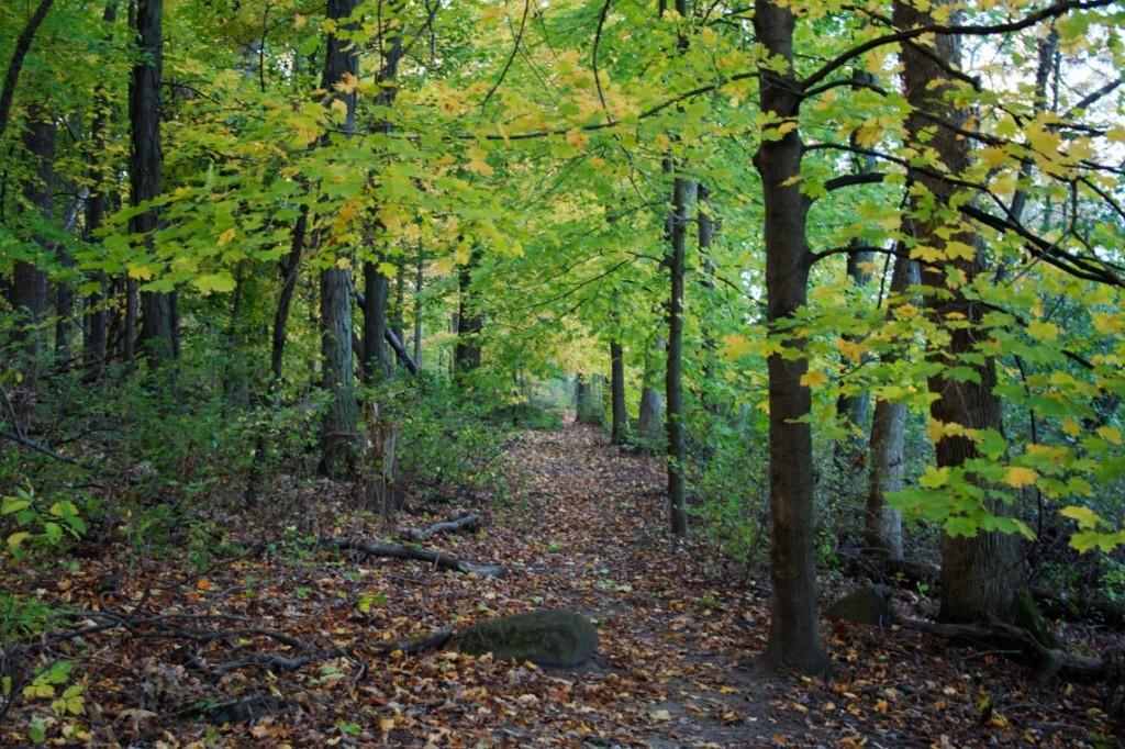 Arboretum_Madison_Wisconsin_0585