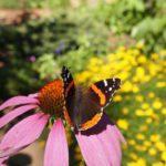 Go, See, Play: Bookworm Gardens in Sheboygan