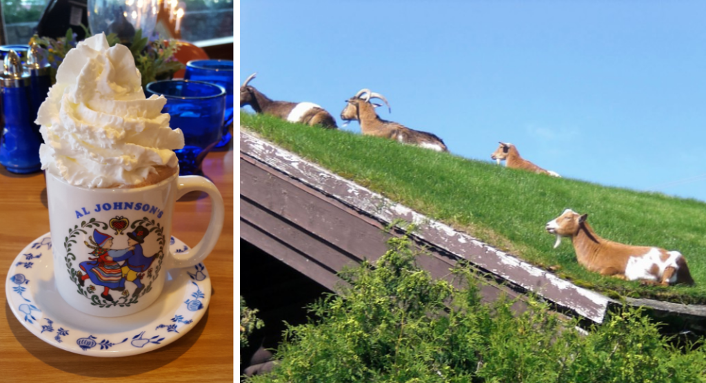 mug of hot chocolate with a lot of whipped cream plus a picture of goats on the roof of Al Johnson's