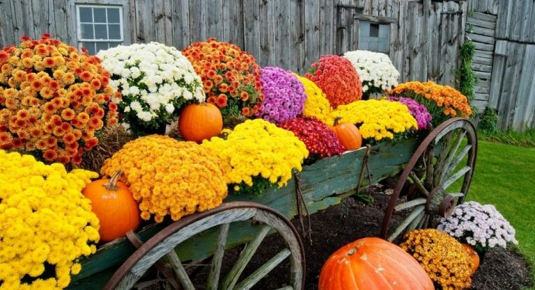 2020 Farms, Pumpkin Patches & Orchards | Greater Madison Area